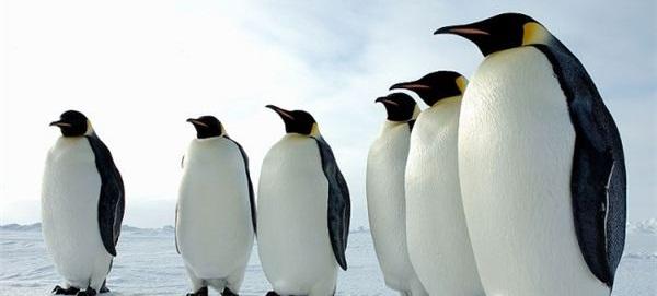 Penguin Update Strikes